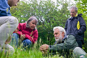 Botanist Ray Woods identifying grass species for participants on plant identification course. Radnorshire Wildlife Trust Nature Reserve, Wales, UK, June.  -  David Woodfall
