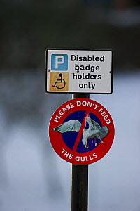 Do not feed the gulls sign, with disabled badge holders only sign, Dumfries, Scotland, December  -  David Tipling