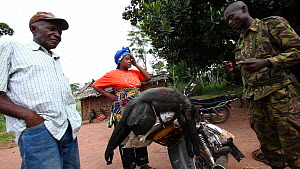 Ecoguard confronting motorbike taxi loaded with Putty-nosed monkey (Cercopithecus nictitans nictitans) and other bushmeat being transported to Bayanga, Lidjombo forest road near Dzanga-Ndoki National... - Jabruson Motion