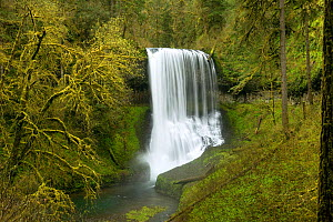 Middle North Falls in Silver Falls State Park, Oregon, USA, May 2011  -  Kirkendall-Spring