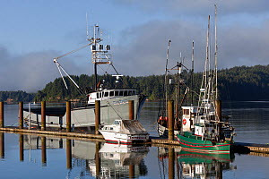 Boats docked, South Slough, Coos Bay, Charleston, Oregon, USA, June 2012  -  Kirkendall-Spring