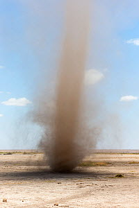 Dust devil in Amboseli National Park in dry season, Kenya, October 2012  -  Ann & Steve Toon