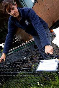 Badger (Meles meles) bovine tuberculosis vaccination deployment. Staff from Cheshire Wildlife Trust, UK, prepare live traps for vaccination. Notes on the cage inform anyone coming across the trap of t...  -  Tom Marshall