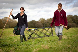 Badger (Meles meles) bovine tuberculosis vaccination deployment. Staff from Cheshire Wildlife Trust, UK, prepare live traps for vaccination. In autumn 2012, wet weather meant many traps had to be take...  -  Tom Marshall