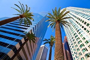 Looking up at skyscrapers and palm trees in downtown Los Angeles, California, USA, July 2011 - Gavin Hellier