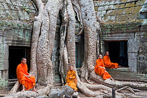 Buddhist monks relaxing at Ta Phrohm Temple, Angkor Wat, Siem Reap, Cambodia 2010. Model released.  -  Gavin Hellier