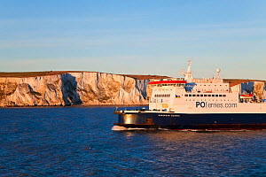 White cliffs of Dover viewed from cross channel ferry, Kent, UK 2009  -  Gavin Hellier