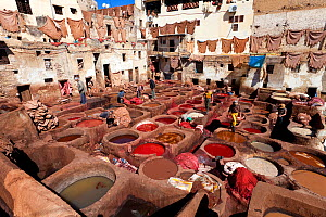 Chouwara traditional leather tannery in Old Fez, vats for tanning and dyeing leather hides and skins, Fez, Morocco, 2011  -  Gavin Hellier