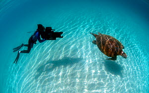 Cameraman Michael Pitts filming Green turtle (Chelonia mydas) Karan Island. Arabian Gulf, June 2009 - Michael Pitts