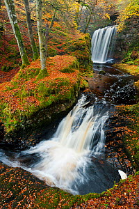 Waterfalls in woodland. Craigengillan Estate, Dalmellington, Ayrshire, October.  -  Niall Benvie