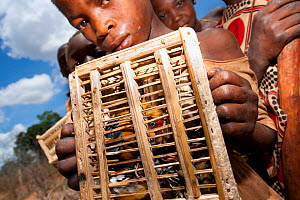 Mozambican children with captive passerines including Red-throated Twinspot (Hypargos niveoguttatus). Birds are caught to eat whilst watching fields against crop raiding baboons. Pemba to Montepuez hi...  -  Jabruson