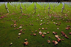 The graves of American soldiers who died in World War 1, in June and July 1918, Bois Belleau, France, September 2012  -  Pascal Tordeux