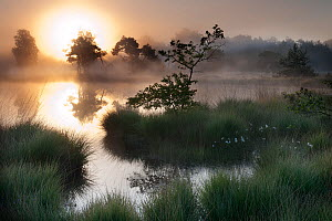 Sunrise over wetland in Klein Schietveld,  heatland, Brasschaat, Belgium, April - Bernard Castelein