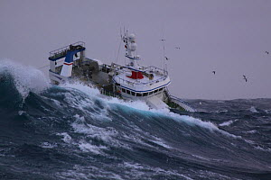 Trawler 'Ocean Harvest' fishing on a stormy North Sea, January 2013. Property released. - Philip Stephen