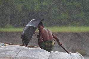 Fisherman with umbrella during monsoon rain, Sundarbans, Bangladesh, September 2011 - Mark MacEwen
