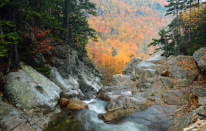 Ellis River high in White Mountain National Forest. New Hampshire, October 2012. - George Sanker
