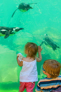 Toddlers watching Magellanic Penguins (Spheniscus magellanicus) swimming underwater at Zoo, UK, May 2008. Model released.  -  David Tipling