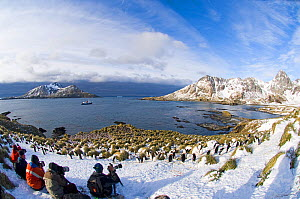 Tourists photographing Macaroni Penguins (Eudyptes chrysolophus) at colony in Cooper Bay, South Georgia, November 2006 - David Tipling