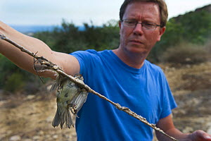 Martin Hellicar from Birdlife Cyprus, holding a limestrick with trapped Blackcap Cyprus, September 2011  -  David Tipling