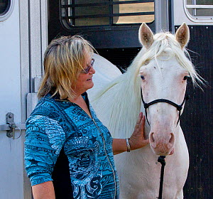 Wild horse / mustang called Claro, rounded up from McCullough Peak herd in Wyoming and adopted by photographer Carol Walker (pictured). Colorado, USA.  -  Carol Walker