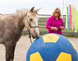 Wild horse / mustang called Mica, rounded up from Adobe Town Herd Management Area in Wyoming and adopted by photographer Carol Walker (pictured). Attending a trial obstacle clinic, designed to increas...  -  Carol Walker