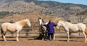 Photographer Carol Walker with her adopted wild horses / mustangs Claro, Cremosso and Mica, rounded up from the McCullough Peak herd and Adobe Town Herd in Wyoming. Resting in their corral, Colorado,...  -  Carol Walker