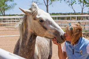 Wild horse / mustang called Mica, rounded up from Adobe Town Herd Management Area in Wyoming and adopted by photographer Carol Walker. Attending the Wild Horse Festival in Santa Fe, New Mexico, meetin...  -  Carol Walker