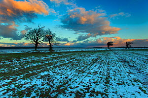 Arable fields in snow, near Southrepps village, North Norfolk, January - Ernie Janes,Ernie  Janes