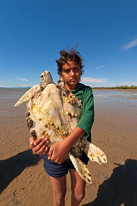 Junior ranger carries a green turtle (Chelonia mydas) to shore for the scientific research data gathering. Queensland, Australia, May 2011. Model released.  -  Jurgen Freund
