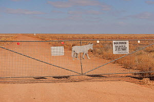 Dog fence from off Borefield Road. This dog fence is the longest fence ever constructed anywhere in the world stretching from Western Australia across central Australia and up into Queensland. It was... - Jurgen Freund