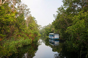 Tourist river boat along black clear tanning peat swamp waters of a Kalimantan river branch of the Sekonyer River, Tanjung Puting National Park, Indonesia, March  -  Jurgen Freund