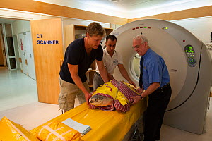 Dr Chris Brown from Channel 10's Bondi Vet TV show, x-ray technical expert Peter Lanski & volunteer Christian Miller with injured turtle 'Angie' coming out of CT Scan xray. Queensland, Australia, Dece... - Jurgen Freund