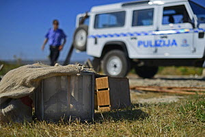 ALE (Administrative Law Enforcement) Police with confiscated turtle doves (Streptopelia turtur) and equipment from dove trapping area, during BirdLife Malta Springwatch Camp, April 2013  -  David Tipling