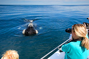 People photographing Southern right whale (Eubalaena australis) from boat, Golfo Nuevo, Peninsula Valdes, UNESCO Natural World Heritage Site, Chubut, Patagonia, Argentina, Atlantic Ocean, October - Franco Banfi
