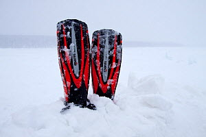 Diving fins in snow, Arctic circle Dive Center, White Sea, Karelia, Northern Russia, March 2010  -  Franco Banfi