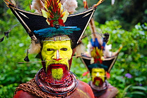 Timan Thumbu Huli Wigman from Tari Southern Highlands Papua New Guinea. Feathers and plumes in head dress include breast shield of Superb Bird of Paradise, Papuan Lorikeet, Lesser Bird of Paradise, Ri... - David Tipling