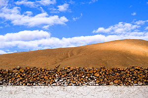 Firewood piled on a white washed wall in the town of Saga (4,640m/15,223ft) in Shigatse Prefecture, southern Tibet  -  Ben Lascelles