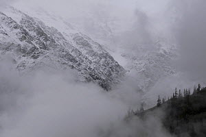 Snow and pine covered hillsides of the Karnali River Valley shrouded in low cloud, near Nanang La pass, Humla Region, Nepal. June 2010  -  Ben Lascelles
