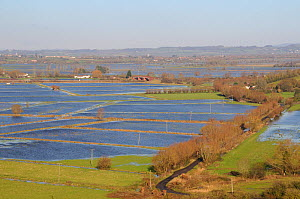 Extensively flooded pastureland and farm tracks on West Sedgemoor and Aller Moor, after weeks of heavy rain, Somerset Levels, UK, December 2012. - Nick Upton