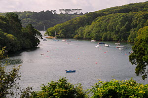 Sailing yachts and other small boats moored in the Helford River, Port Navas, Cornwall, UK, August 2012 - Nick Upton