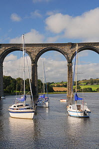 Sailing yachts moored in the River Lynher at high tide below St. Germans railway viaduct, Cornwall, UK, August 2012  -  Nick Upton