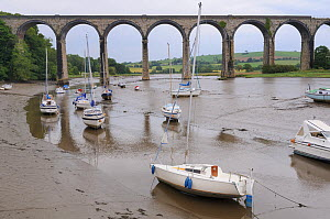 Sailing yachts moored in the River Lynher at low tide below St. Germans railway viaduct, Cornwall, UK, June 2012  -  Nick Upton