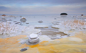 Baltic sea is freezing up along the northern coast of Estonia. Lahemaa National Park, Estonia, January 2012. - Sven Zacek,Sven  Zacek