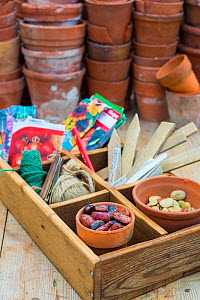 Potting bench with saved seeds including a pot of Runner beans (Phaseolus coccineus) and other gardening items  -  Gary K. Smith