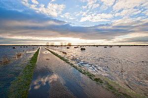 Flooded pasture, ditches and road after heavy rains, on Tadham Moor, Somerset Levels, England, December 2012 - John Waters