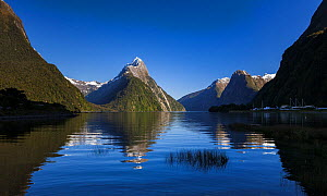 Morning light on Mitre Peak (height 1683m) reflected in the waters of Milford Sound. Milford Sound, Fiordland National Park, Southland, South Island, New Zealand, October 2006  -  Andy Trowbridge