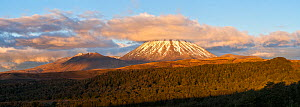 Mount Ngauruhoe (height 2287m), with its distinctive volcanic cone in the late evening Tongariro National Park, Taupo District, Waikato Region, North Island, New Zealand. November 2006  -  Andy Trowbridge
