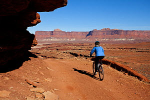 Mountain biker descending Murphy Hogback along the White Rim Road in the Island In The Sky District. Canyonlands National Park, Utah, October 2012. Model released.  -  Kirkendall-Spring