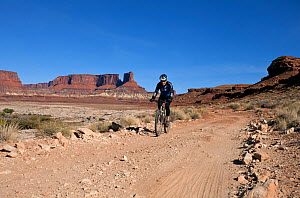 Mountain biker near Potato Bottom along the White Rim Road in the Island In The Sky District. Canyonlands National Park, Utah, October 2012.  -  Kirkendall-Spring