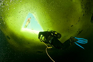 Scuba diver under ice, surfacing to the hole, viewed from underneath, Arctic circle Dive Center, White Sea, Karelia, northern Russia March 2010. No release available.  -  Franco Banfi